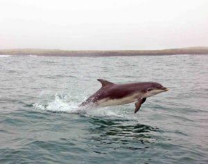 Dolphin Sligo